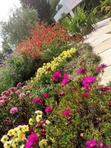 Sunny Dublin garden