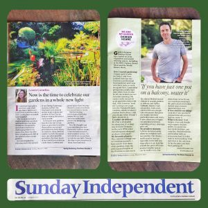 Sunday Independent Article 1